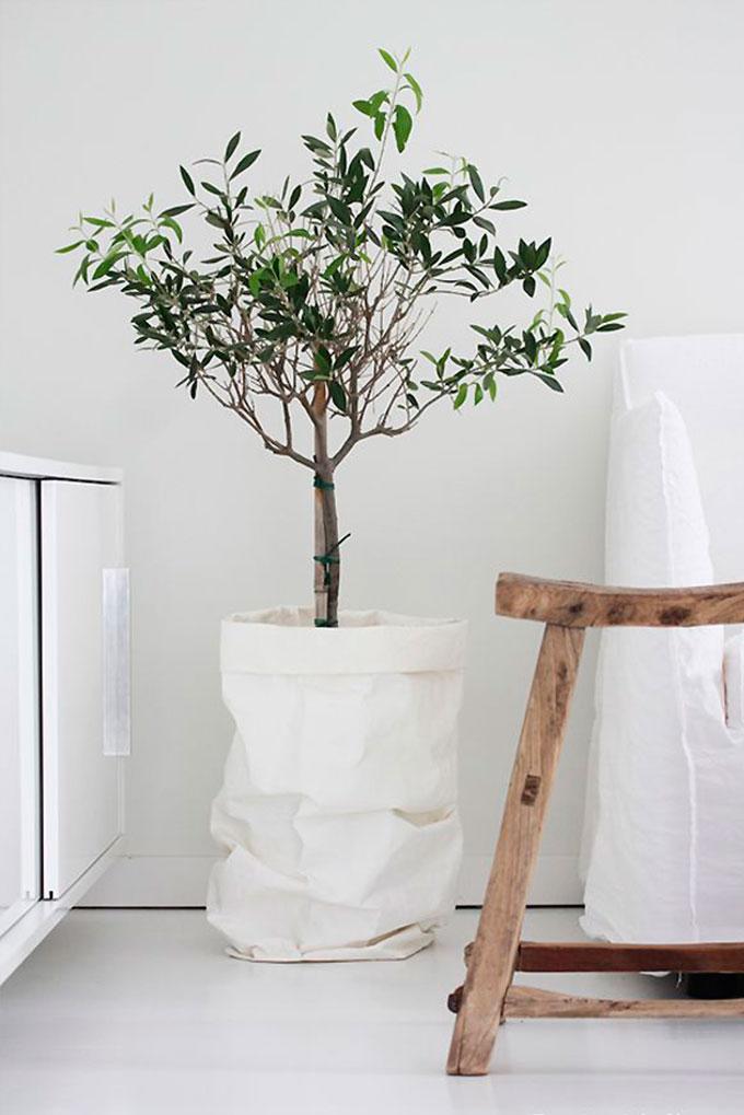 decorar-con-plantas